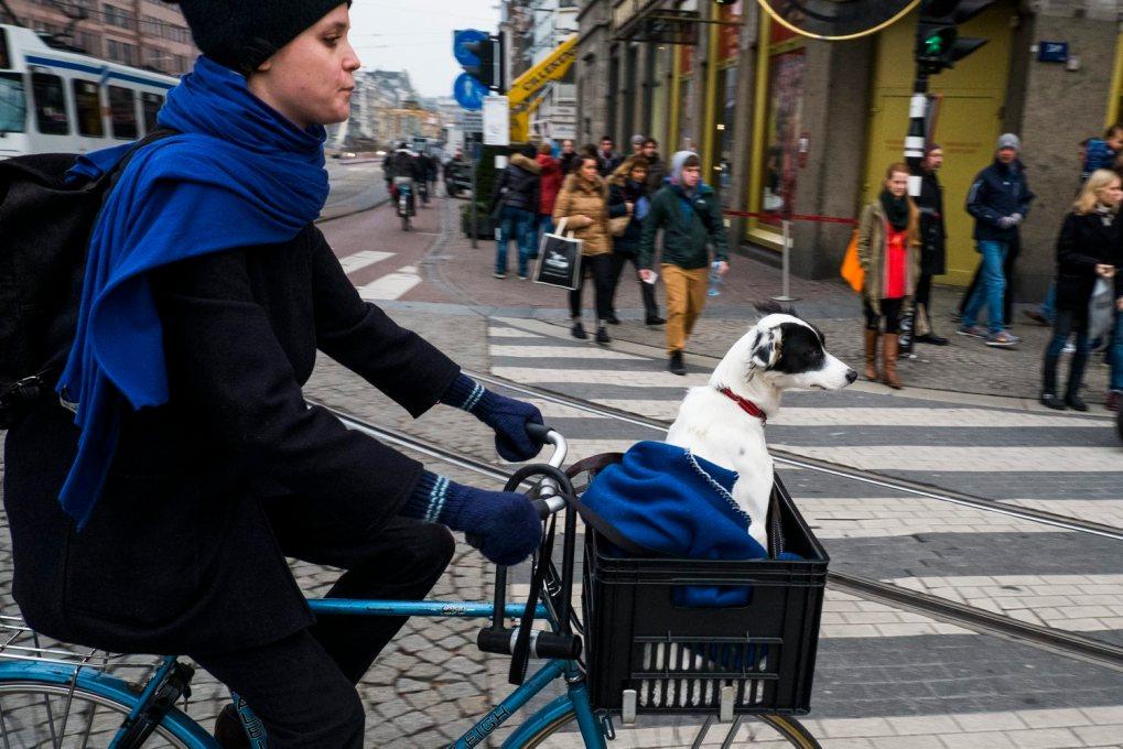 Nederland, Amsterdam, 18 nov 2013 Damrak. Vrouw op de fiets met hondje voor op de fiets in een krat. Foto(c): Michiel Wijnbergh